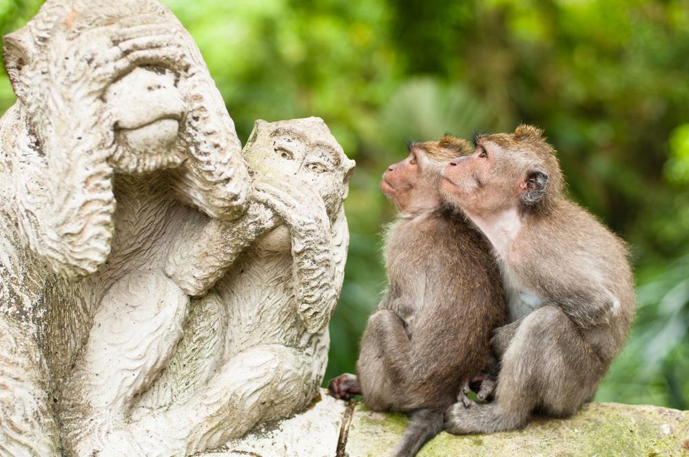 Сад обезьян в Индонезии