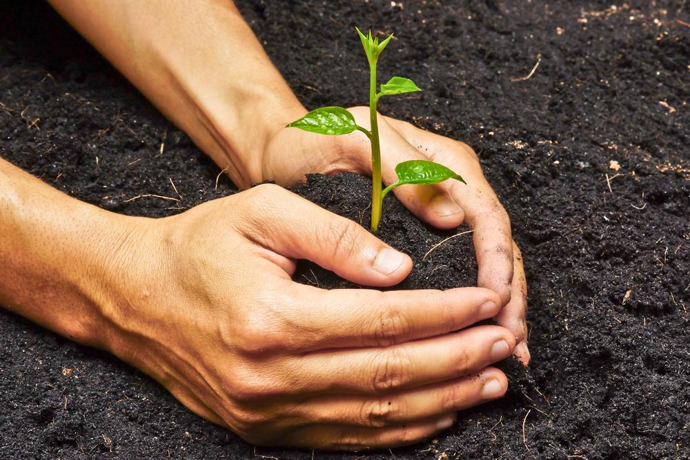 В Америке отмечают День посадки деревьев.Вокруг Света. Украина