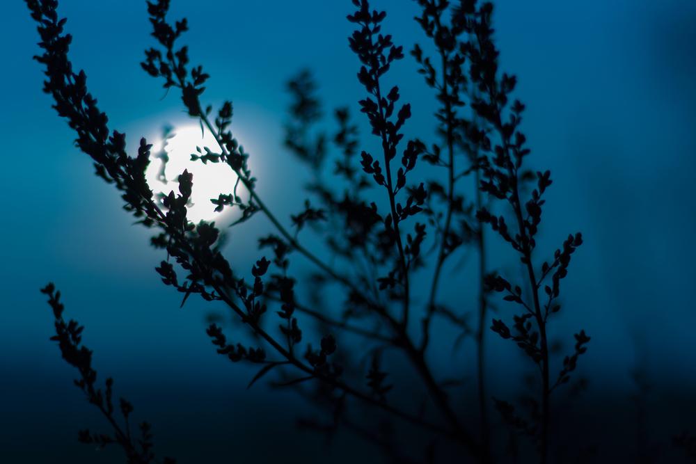 Вальпургиева ночь: костры, обряды и вещие сны.Вокруг Света. Украина