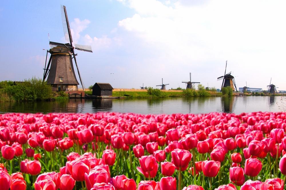 Национальный день мельниц в Нидерландах.Вокруг Света. Украина