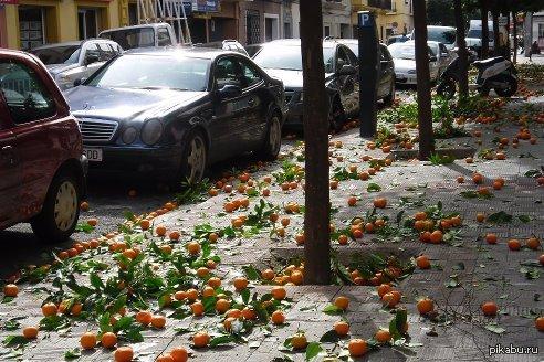 Апельсины валяются на улице Севильи