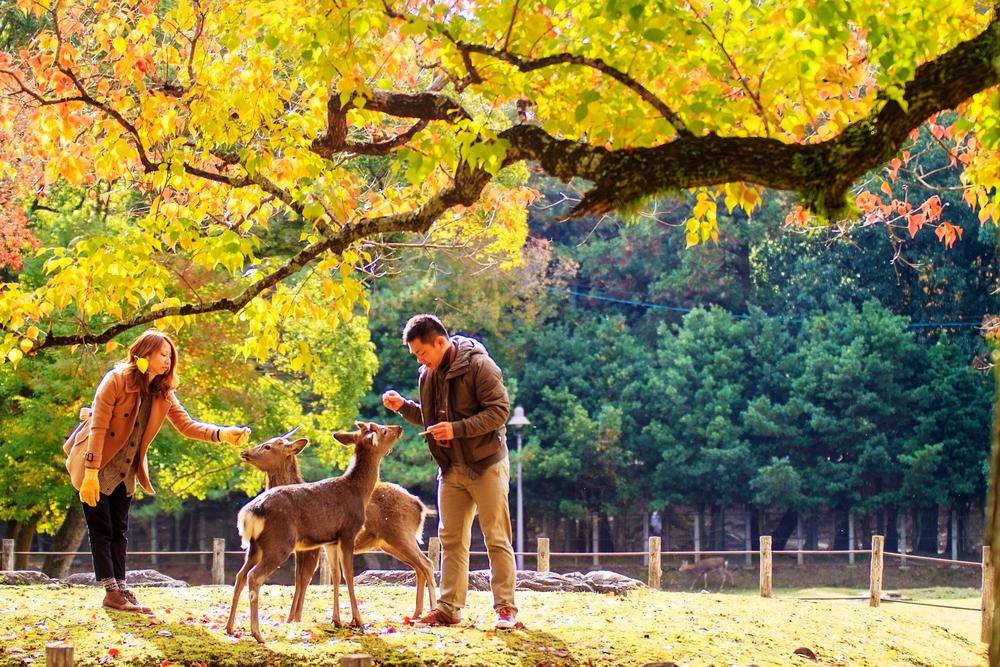 Японцы наслаждаются природой в День зелени.Вокруг Света. Украина