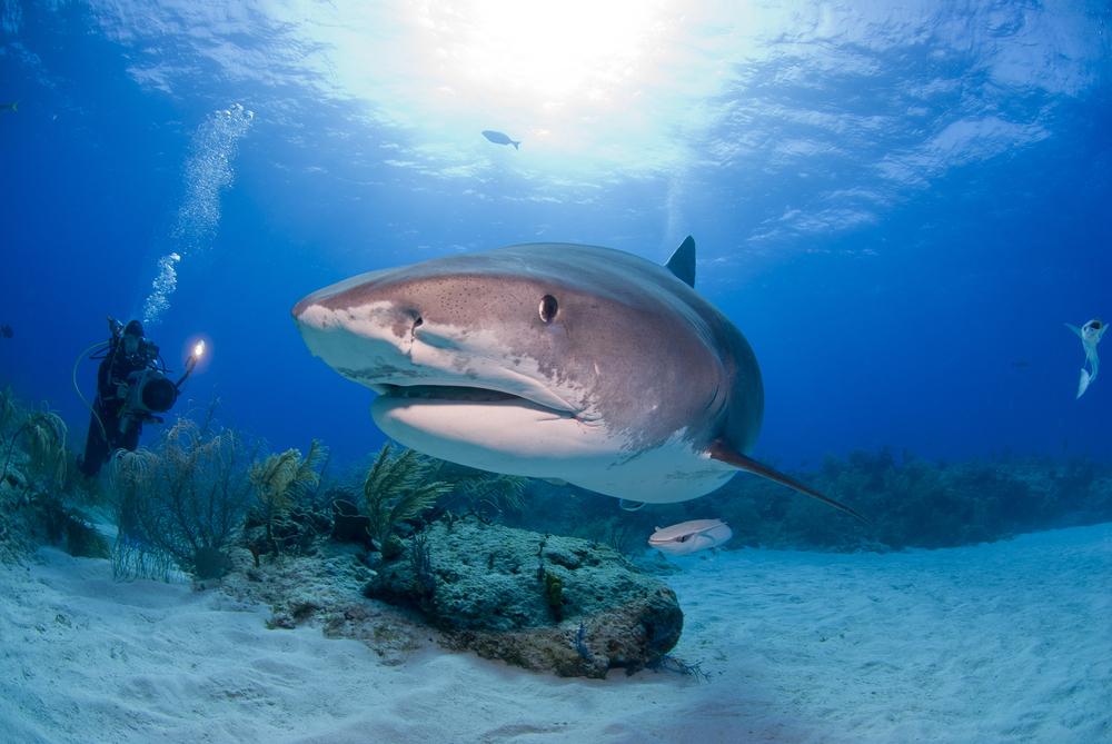У акул появился шанс на выживание