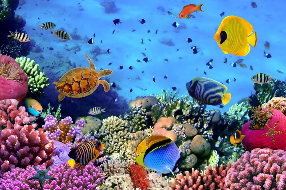 5 интересных фактов о Мировом океане.Вокруг Света. Украина