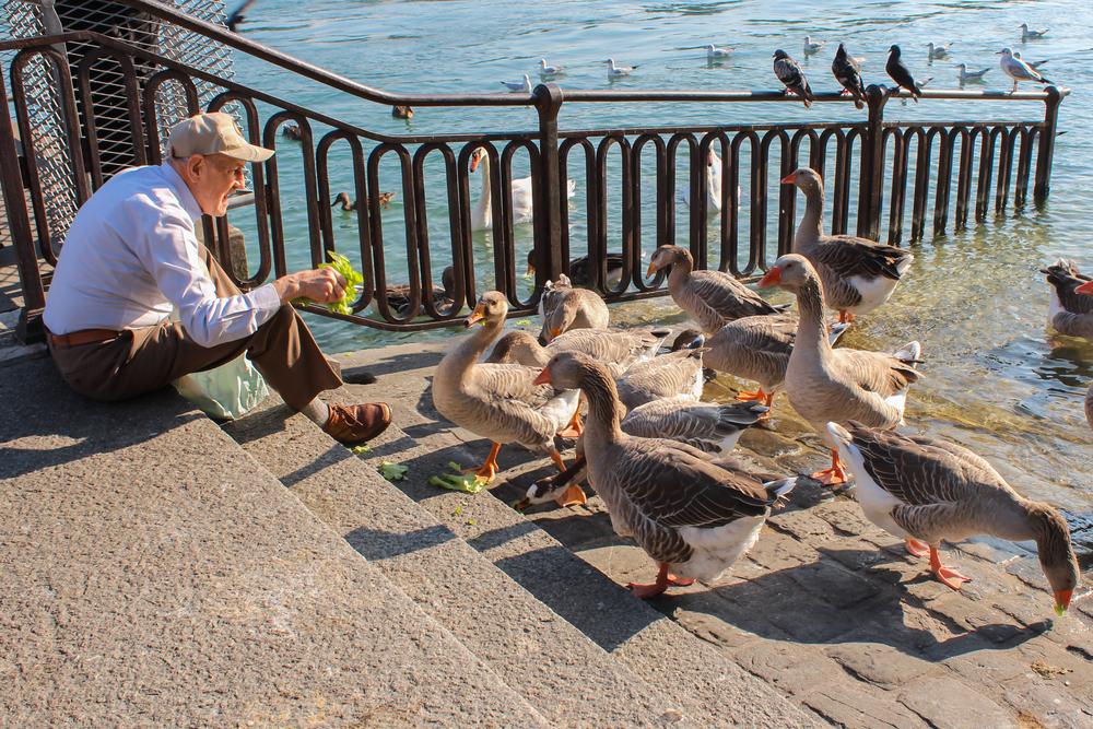 Оплот мирной жизни. Записки из живописной Швейцарии.Вокруг Света. Украина