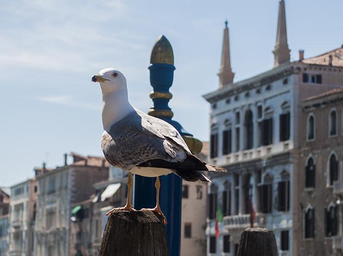 Венеция, приятно познакомиться.Вокруг Света. Украина