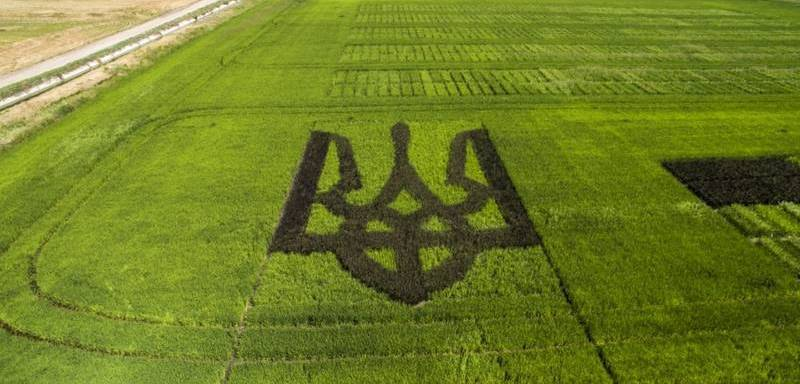 На Херсонщине вырастили тризуб из риса