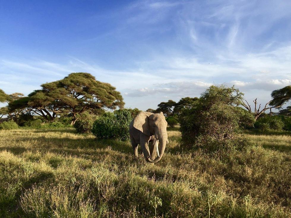 Каково это – провести медовый месяц в Африке.Вокруг Света. Украина