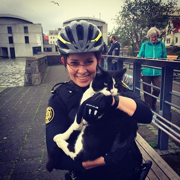 Полиция Рейкьявика постит в Instagram щенков, котят и мороженое.Вокруг Света. Украина