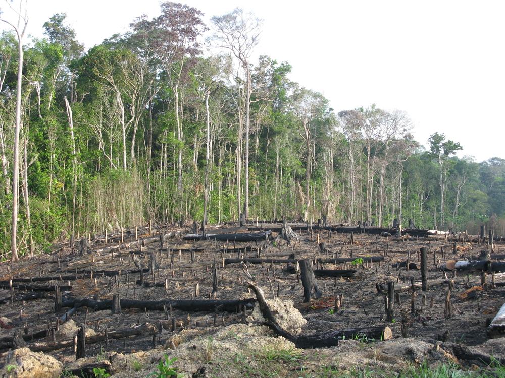 Норвегия вступает в борьбу за тропические леса.Вокруг Света. Украина