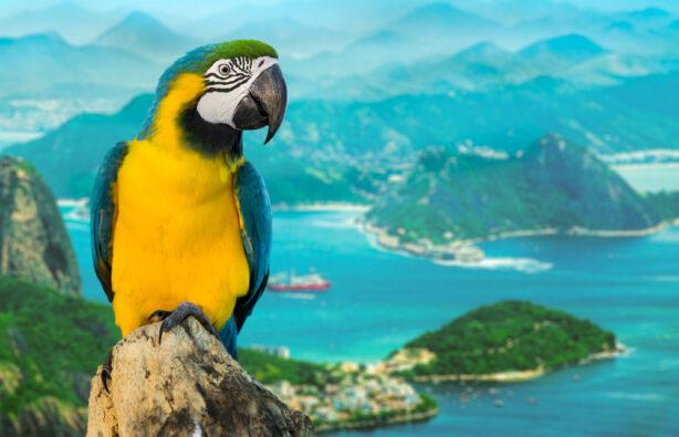 попугай в Рио