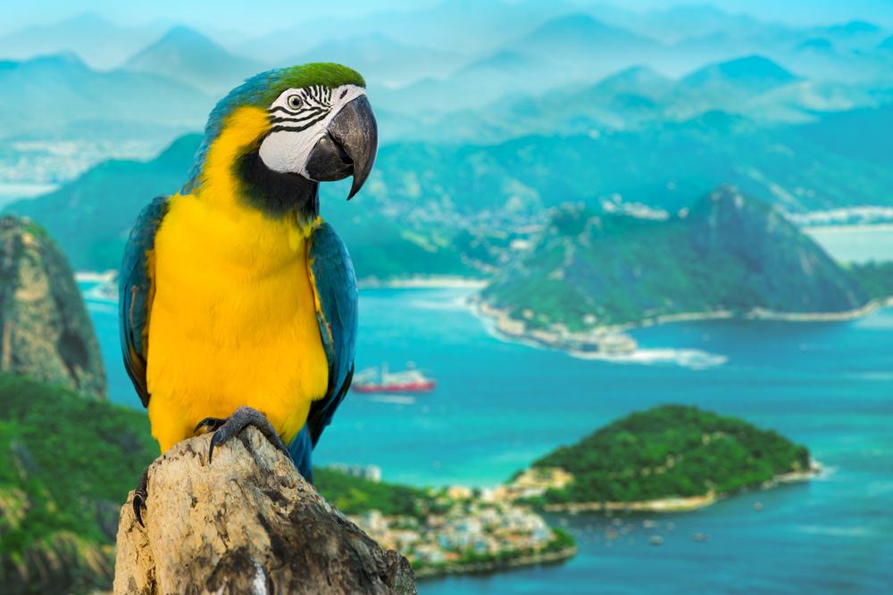 Кино посмотрел – как в Рио побывал.Вокруг Света. Украина