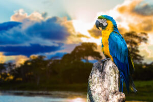 20 интересных фактов о Бразилии