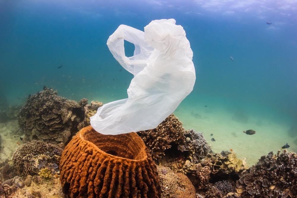 К 2050 году в мировом океане пластика будет больше, чем рыбы.Вокруг Света. Украина