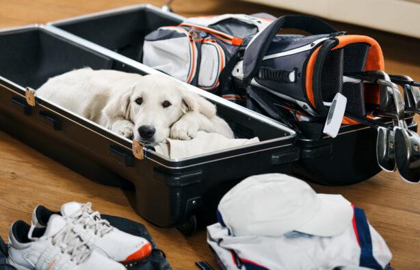 Как путешествовать с домашним животным?