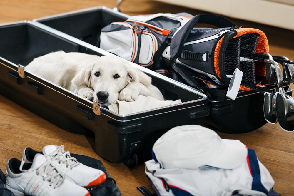 Как путешествовать с домашним животным?.Вокруг Света. Украина