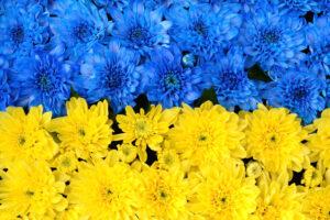 В Киеве создадут самый большой цветочный флаг