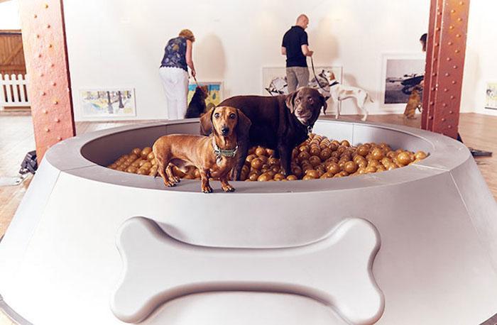 В Лондоне открыли выставку современного искусства для собак