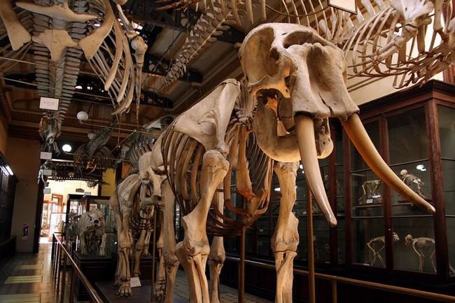 Google запустил 3D-экскурсии по лучшим музеям мира.Вокруг Света. Украина