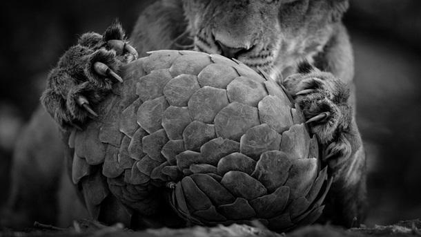 Лучшие фотографии дикой природы 2016