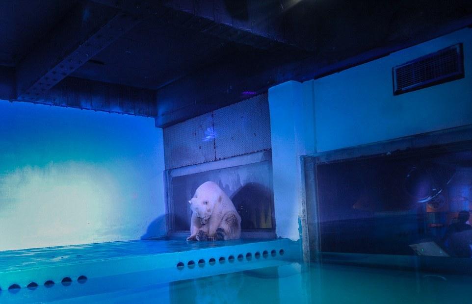 Самый депрессивный зоопарк в мире.Вокруг Света. Украина