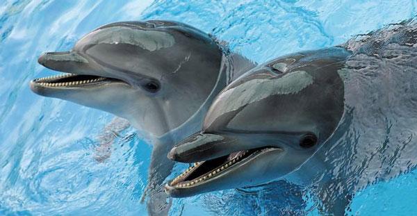 Дельфины общаются предложениями.Вокруг Света. Украина