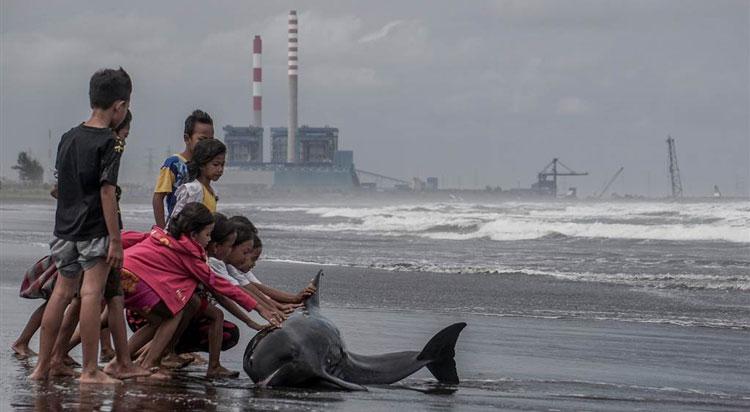 Дети спасают дельфина