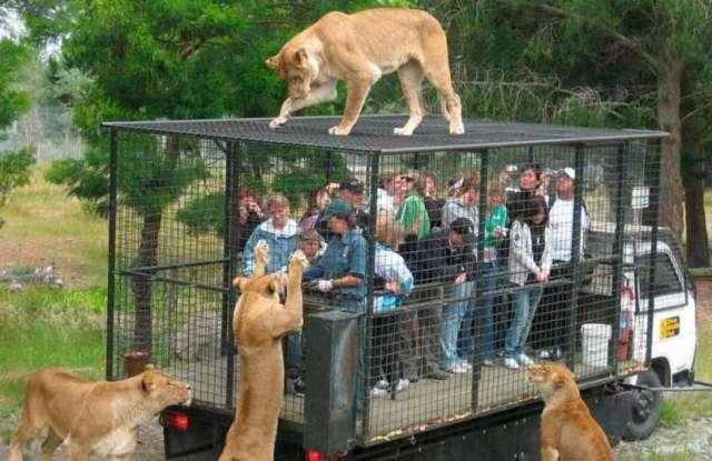 Зоопарк наоборот.Вокруг Света. Украина