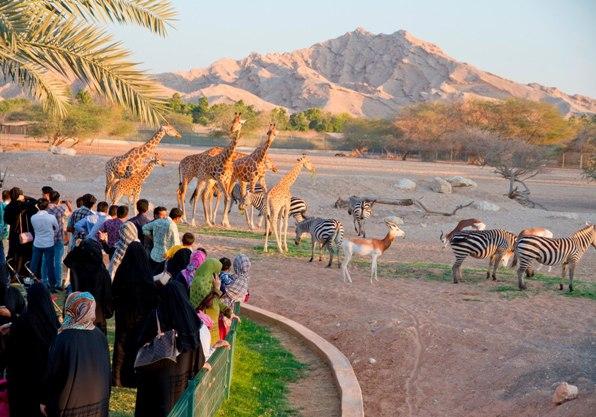 zooAl-Ain-Zoo-a