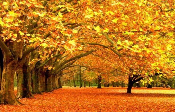 Фото: relax.com.ua