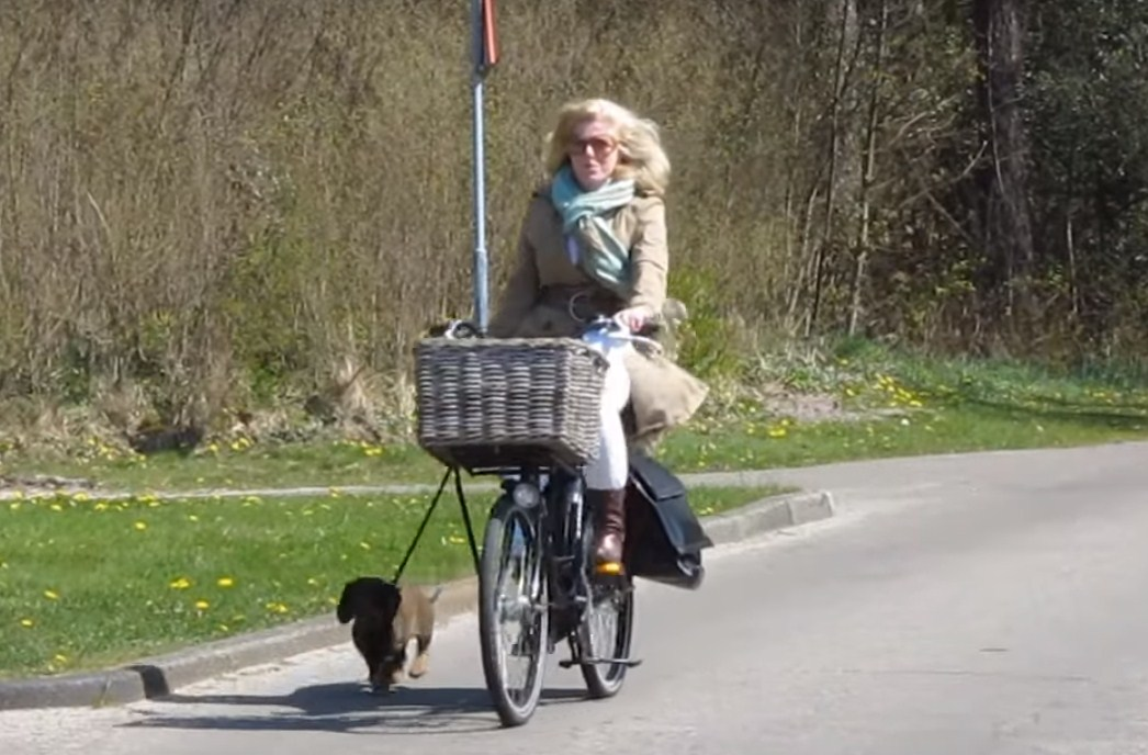 Датский стиль езды на велосипеде