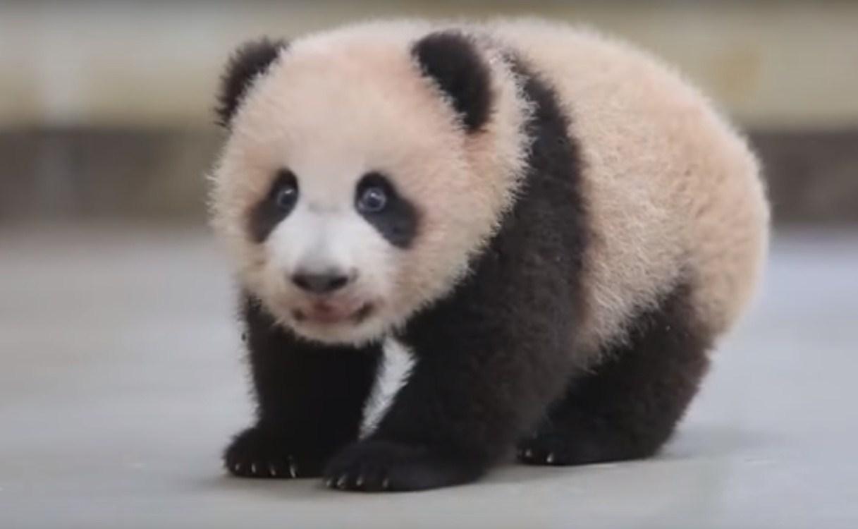 Первые шаги панды