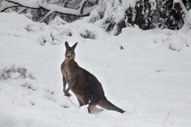 фото: www.abc.net.au