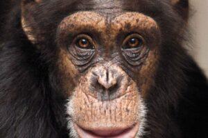 Озорные и веселые обезьянки - любимицы гостей Фельдман Экопарк