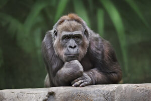 Известные обезьяны и их вклад в науку