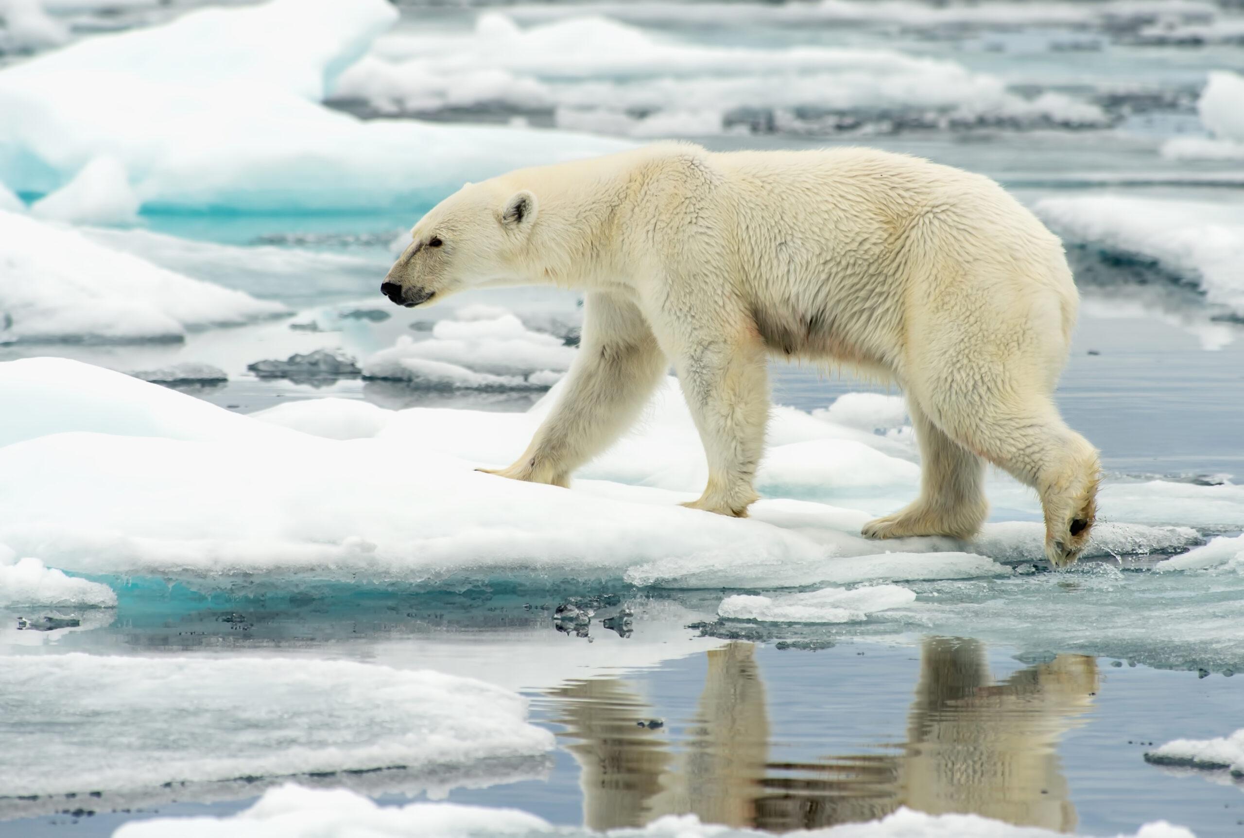 На Северном полюсе в декабре побит температурный рекорд.Вокруг Света. Украина