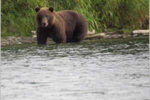 А ти ведмедів бачив?