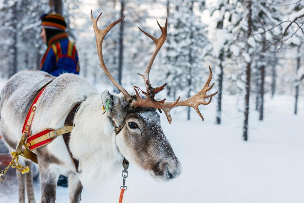17 интересных фактов о Лапландии