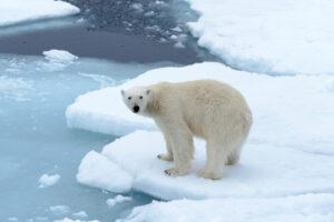 12 интересных фактов о Северном полюсе