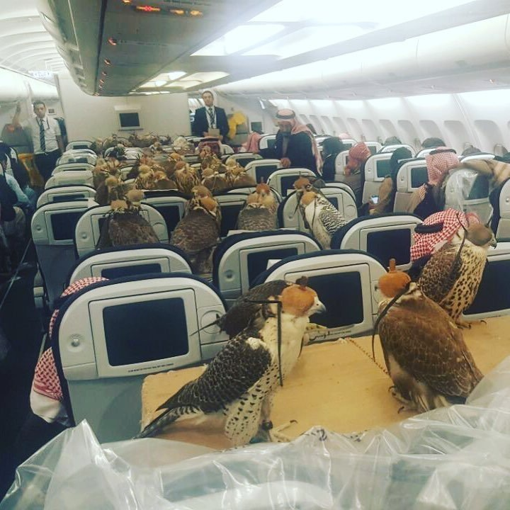 Арабский принц купил места в самолете для 80 соколов