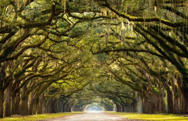 фото: forumdaily.com