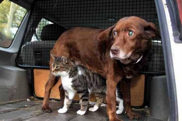 Кошка-поводырь