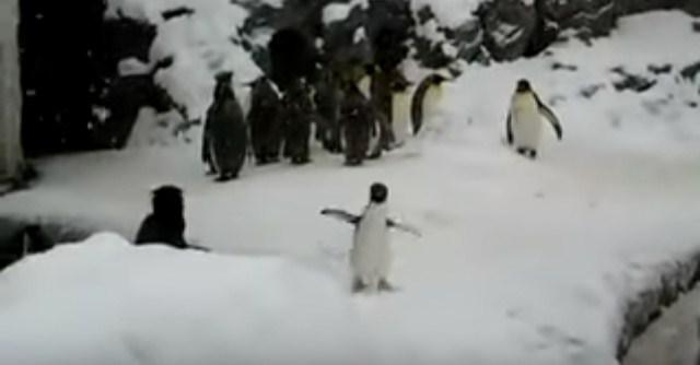 Очень радостный пингвин