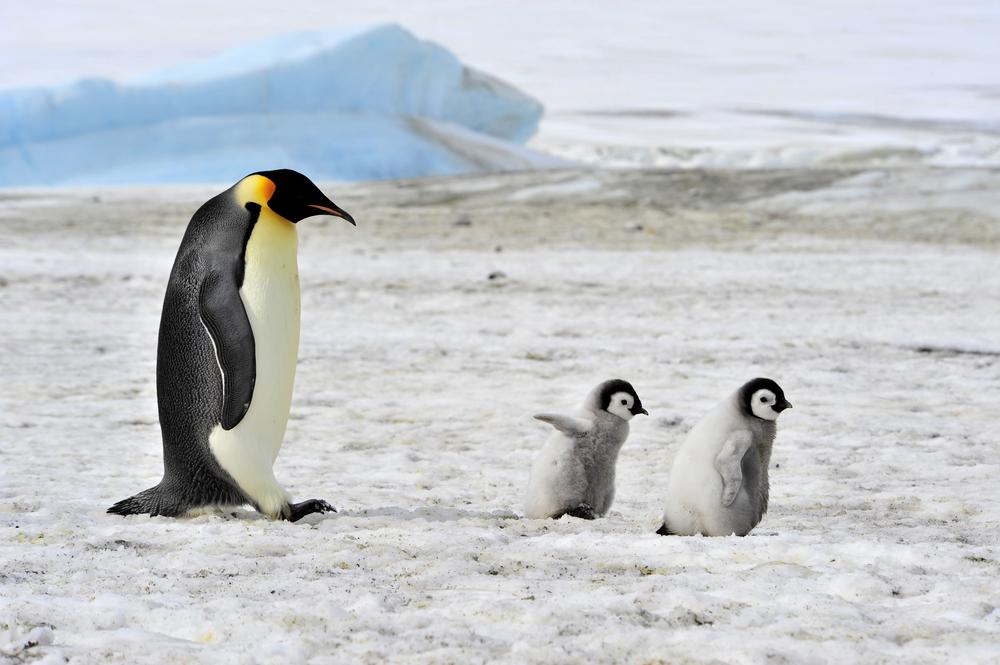 Всемирный день пингвина
