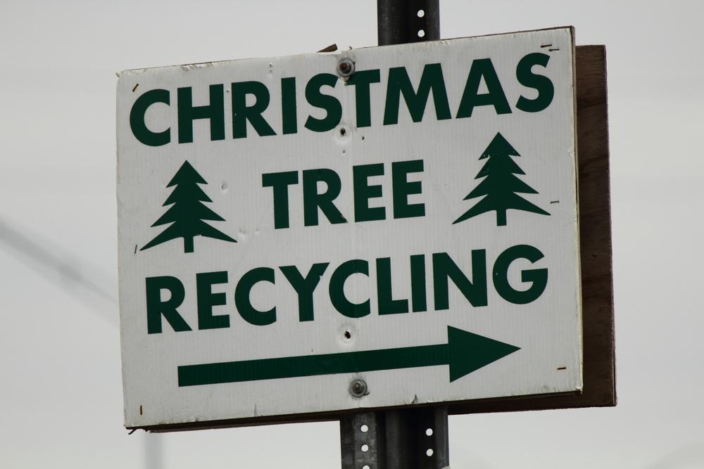 Куда девать елку после новогодних праздников?