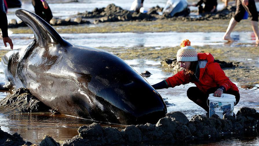 Почему киты и дельфины выбрасываются на сушу.Вокруг Света. Украина