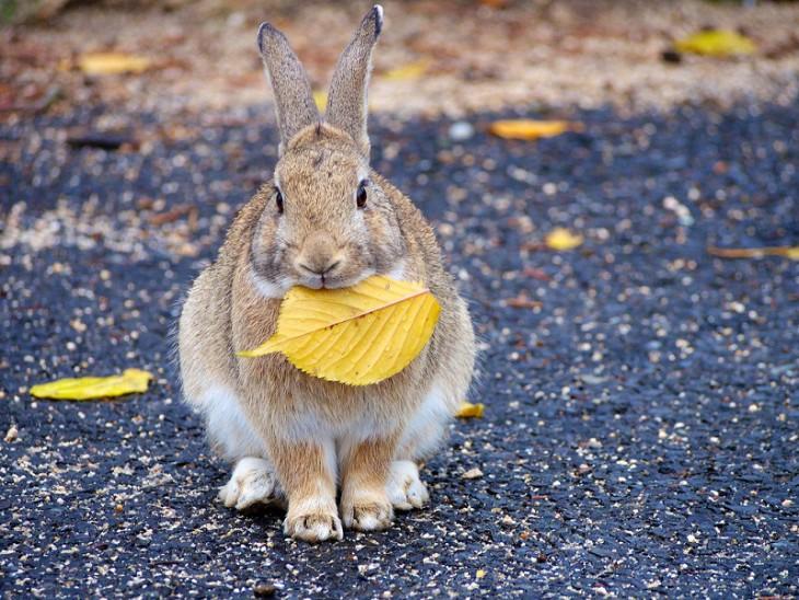 Остров кроликов в Японии.Вокруг Света. Украина
