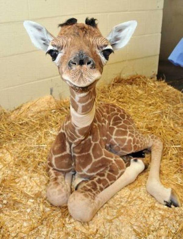 Фото: www.animalworld.com.ua