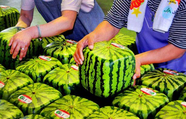 Фото: hitovik.com