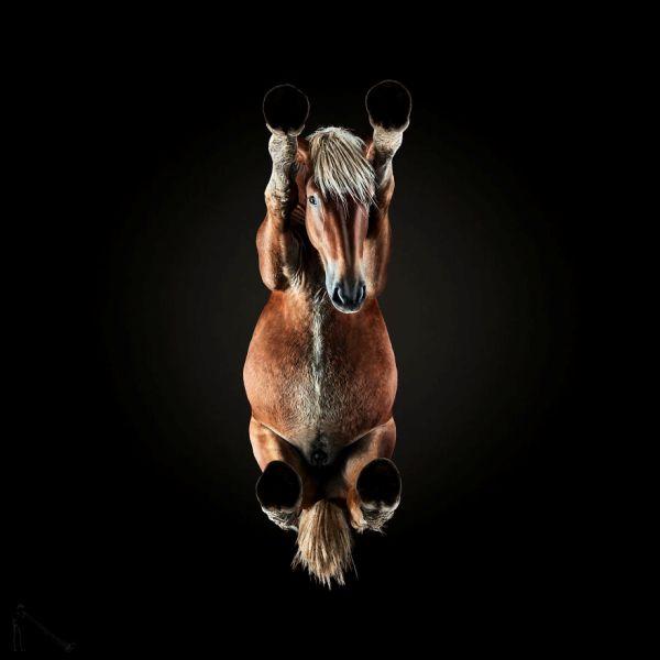 Необычная фотосессия: лошадь снизу